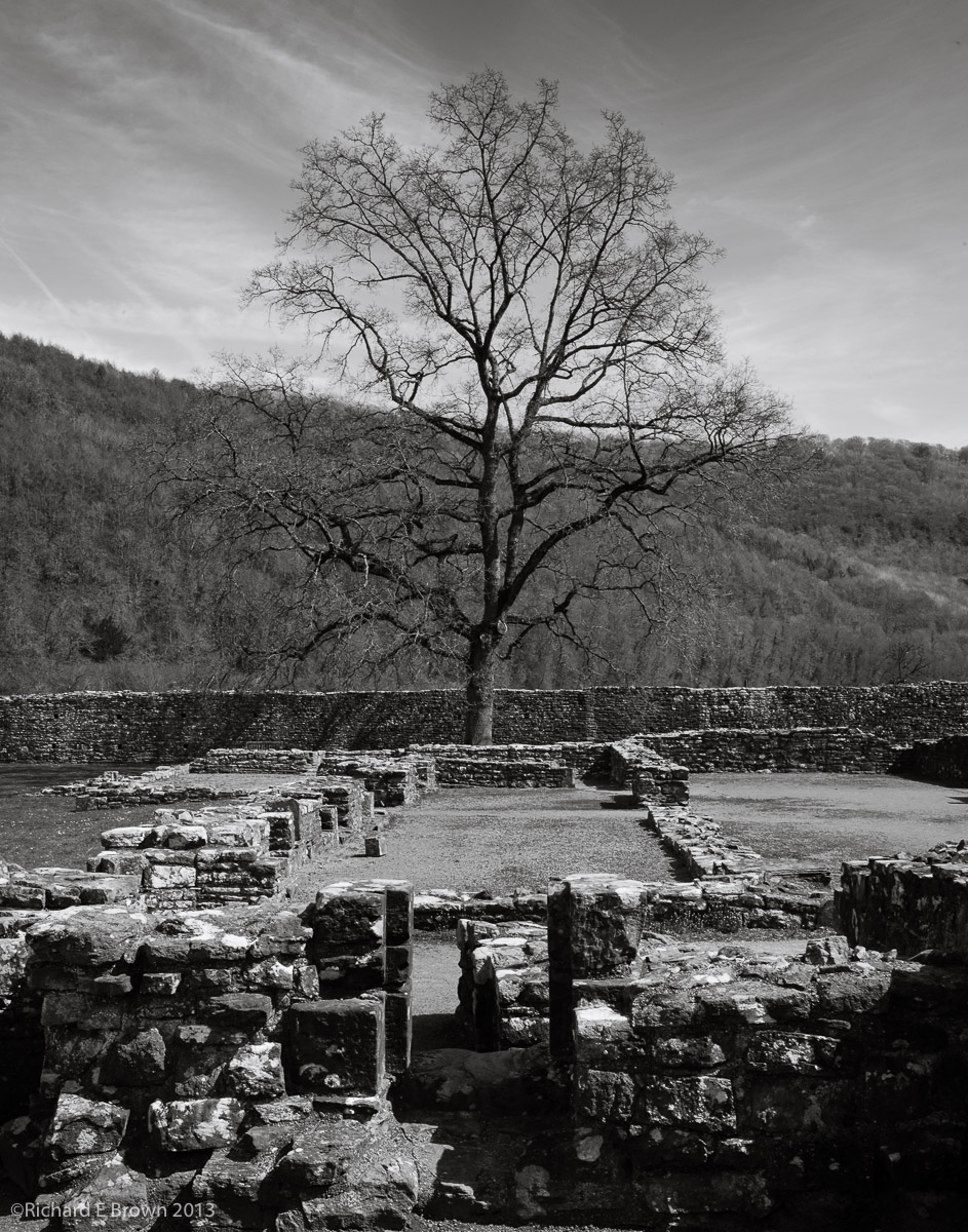 Tree at Tintern Abbey