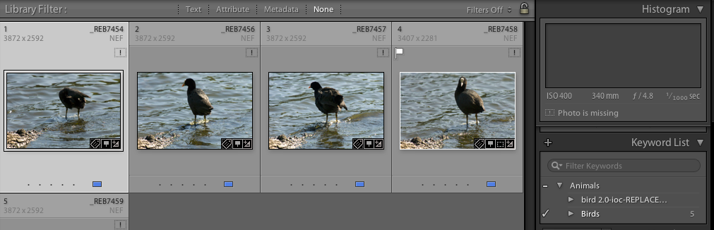 Lightroom Keyword Bird List