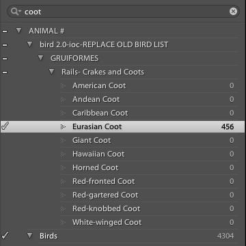 Bird Keywords