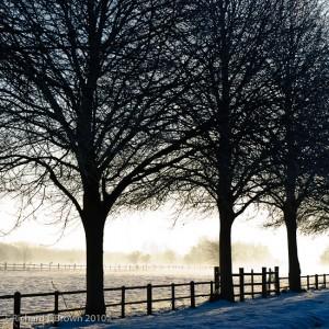 Trees, Mist and Snow