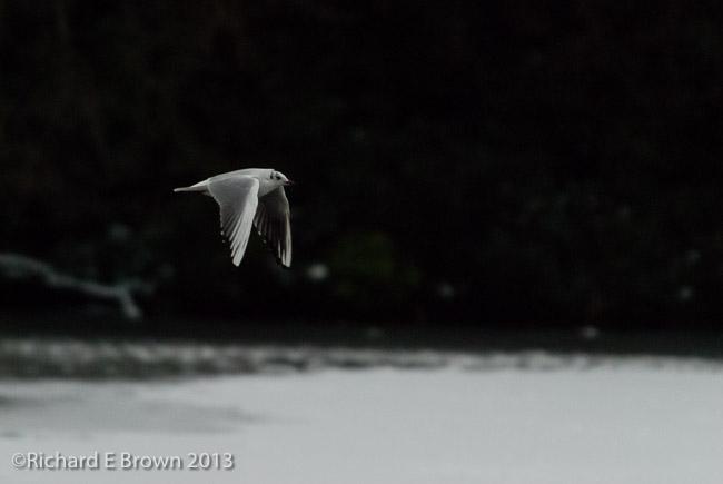 flight over ice