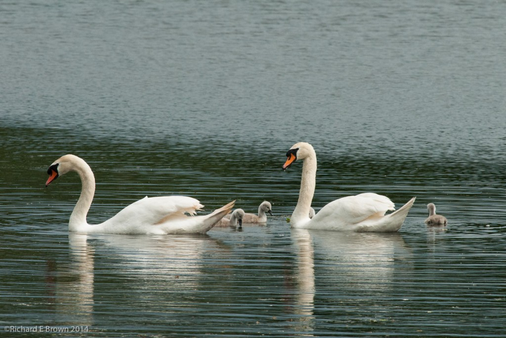 Whisby_Nature_Reserve-3