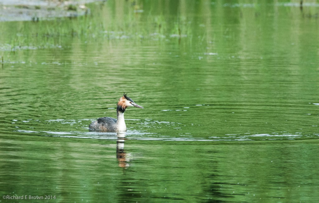 Whisby_Nature_Reserve-4