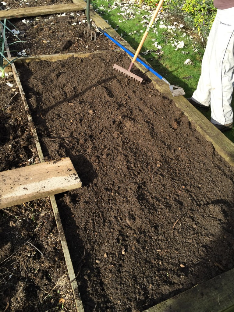 veg plot-2